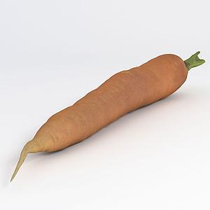 胡蘿卜模型
