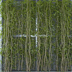 清新藤蔓綠植墻模型