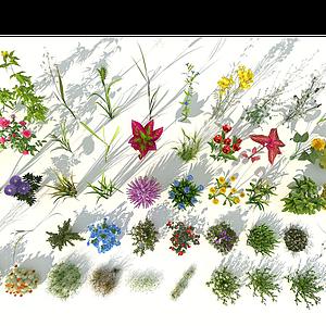 花草組合模型