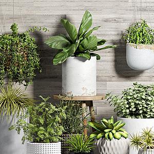 吊蘭綠植盆栽組合模型
