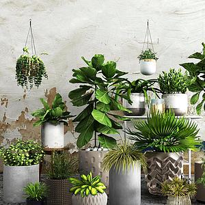 現代吊蘭綠植盆栽組合模型