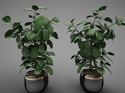 3d現代風格盆栽模型