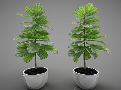 3d現代風格植物模型