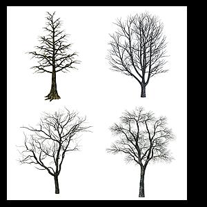 現代枯樹模型