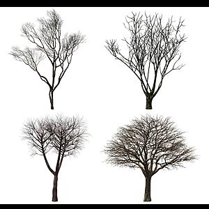 现代景观枯树模型