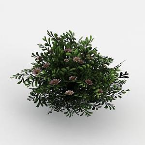 3d魔獸世界<font class='myIsRed'>灌木叢</font>場景裝飾模型