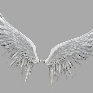 白色翅膀模型