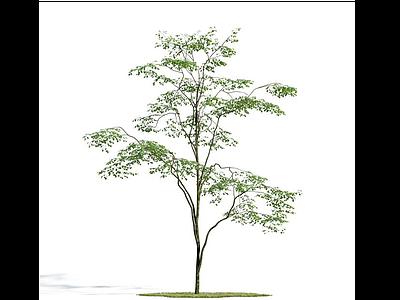 3d植物免費模型