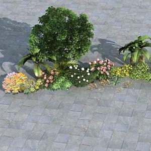 植物組模型
