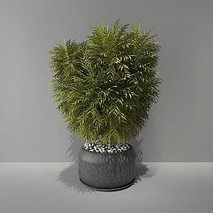竹子綠植盆栽模型