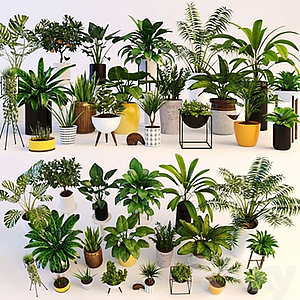 3d<font class='myIsRed'>盆栽</font>植物模型