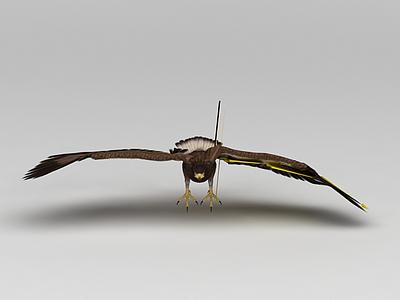 鷹模型3d模型