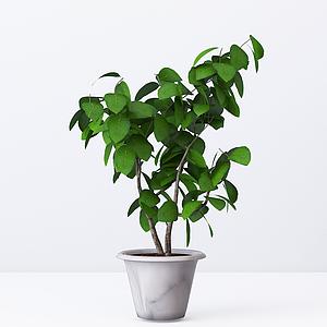 現代綠植室內盆栽模型