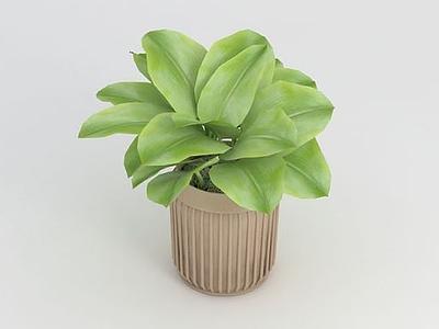 3d綠植盆栽免費模型