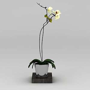 3d黃色蘭花盆栽模型