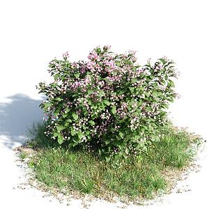 園林灌木模型