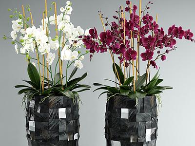 3d創意蘭花花瓶模型