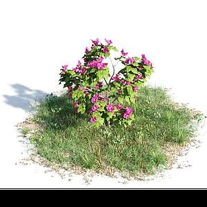 開花灌木模型