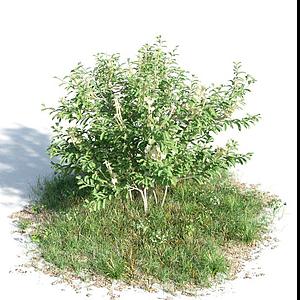 觀賞灌木模型