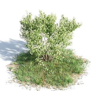 園林景觀灌木模型