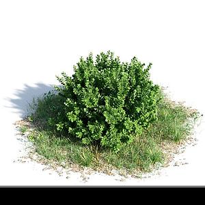景觀灌木模型