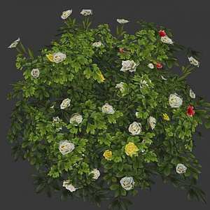 3d花草灌木模型