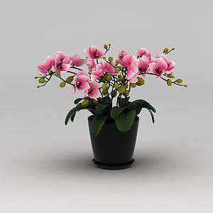 3d仿真裝飾花盆模型