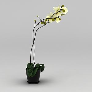 3d黃色蘭花裝飾花盆模型