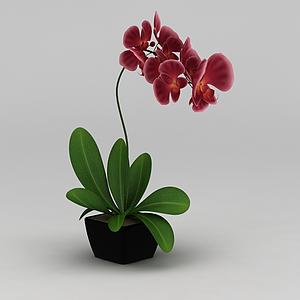 3d仿真蘭花花盆裝飾品模型