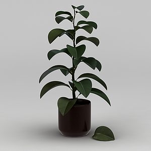 灌木綠植盆栽模型