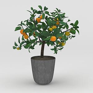 金桔盆栽觀賞橘子樹模型