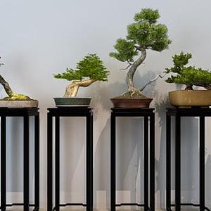 3d中式樹樁盆景盆栽模型