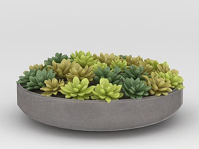 3d辦公室多肉植物<font class='myIsRed'>花盆</font>擺件模型