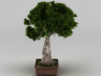 3d戶外精品大樹盆栽模型