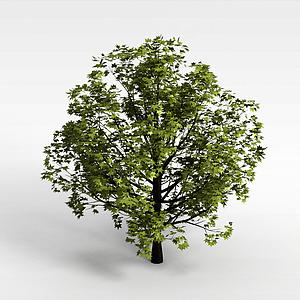 植物大樹模型