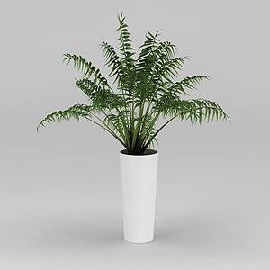 室內盆栽模型
