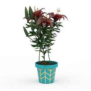 3d紅色百合花盆栽模型