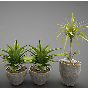 现代风格植物模型