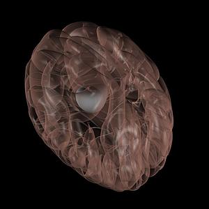 腦垂體模型