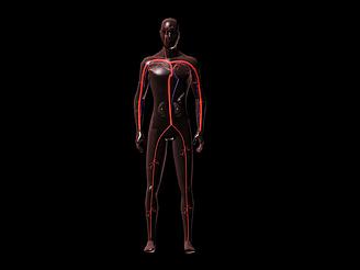 人體動靜脈血管模型