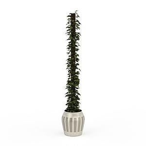 爬藤盆栽模型