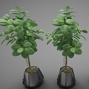 現代風格植物模型