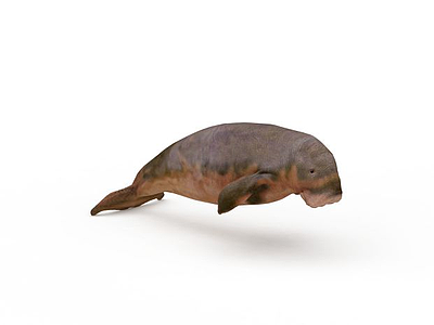 海象模型3d模型