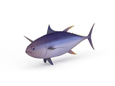 深水魚模型3d模型