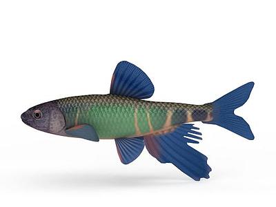 熱帶魚模型3d模型