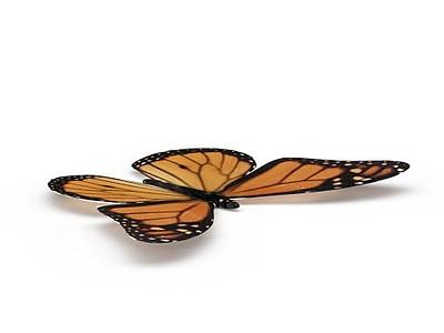 蝴蝶模型3d模型