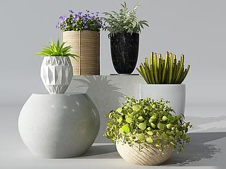 現代盆栽洋甘菊模型