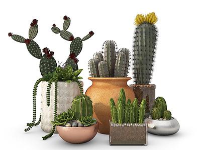 現代裝飾植物仙人掌模型3d模型