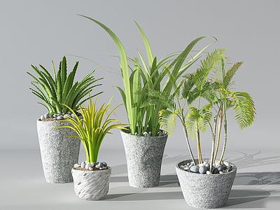 現代盆栽仙人掌花瓶模型3d模型