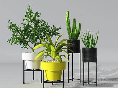 現代盆栽仙人掌模型3d模型
